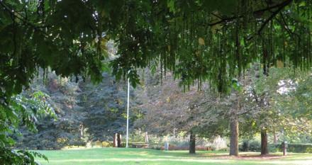Bos der Onverzettelijken - Het Herdenkingsveld