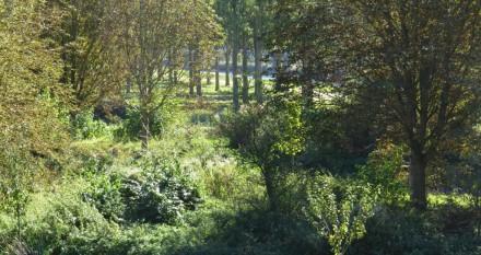 Doorkijkje naar Lage Vaart vanaf Rietveldpad