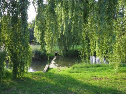Water ter hoogte van Robijnplantsoen