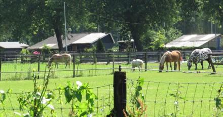 Spittershoek paardenweide