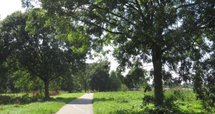 Beginbos langs de A6