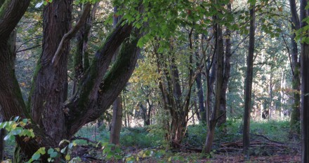 Het Beginbos door de bomen
