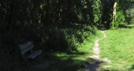 Olifantenpad in het Vroege Vogelbos