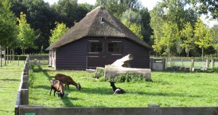 Schaapskooi met geiten