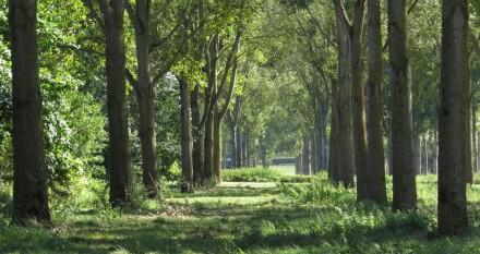 Doorkijkje bomenlaan