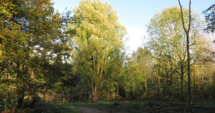 Groene boom in Beginbos